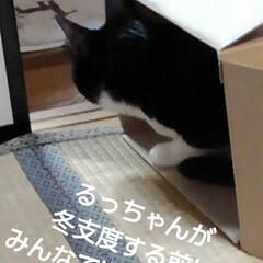 段ボール/猫/三姉弟/フォロー大歓迎/ここが好き 段ボールの箱 大好きな3にゃんず (昨日…
