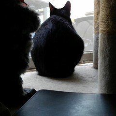 白黒猫/フォロー大歓迎 みんなが台風の心配している朝 鳥達が忙し…