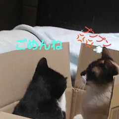 猫のいる生活/にゃんこ同好会/ねこ 箱入り息子と箱入り娘が喧嘩して 仲直りし…(8枚目)