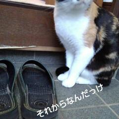 三毛猫/猫のいる生活/にゃんこ同好会/にゃんこ日めくり おはようございます 今日は良い天気です …(5枚目)