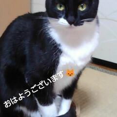 ご挨拶/にゃんこ同好会/白黒猫/にゃんこ日めくり/フォロー大歓迎 おはようございます🐱 1月20日の朝です…(1枚目)
