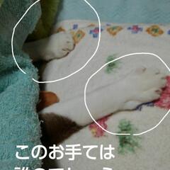 にゃんこ同好会/三姉弟猫 昨日の夜のひとこま 可愛いお手てを出して…