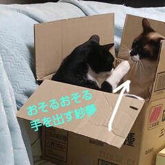 猫のいる生活/にゃんこ同好会/ねこ 箱入り息子と箱入り娘が喧嘩して 仲直りし…(3枚目)
