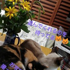 ねこのいる生活/ねこ/にゃんこ同好会/花がある暮らし お父さんが畑から にゃんずに猫じゃらしを…(4枚目)