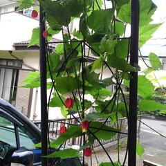 庭の夏の花/フォロー大歓迎/夏のお気に入り/写真/夏の花 庭に咲いている夏の花達(10枚目)