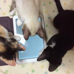 仲良し/姉弟猫/ゲーム/ねこ/春のフォト投稿キャンペーン/フォロー大歓迎/... ゲームその2 水道ポタポタゲーム  もの…