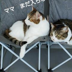 猫のいる生活/にゃんこ同好会/にゃんこ日めくり おはようございます(こんにちわ) 5月2…(2枚目)