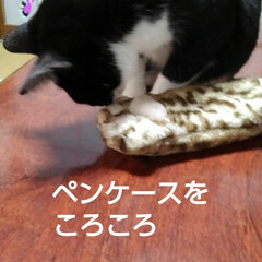 白黒猫 いたずら紗夢