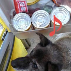 リミアペット同好会/リミアの冬暮らし ご飯待ちきれず冷蔵庫を 下から覗き、物色…