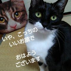 猫のいる生活/白黒猫/にゃんこ同好会/にゃんこ日めくり おはようございます 4月29日 水曜日で…(2枚目)