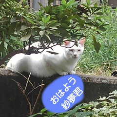 猫/フォロー大歓迎/にゃんこ同好会/リミアペット同好会 長く3匹で見つめあってました 人間だった…