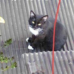 ねこのきもち/猫のいる生活 今日ベランダから 瑠月がいつかすると思っ…(4枚目)