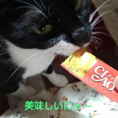 猫/三兄妹/フォロー大歓迎/朱色 美味しいおやつの時間