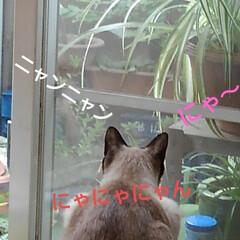 猫のいる生活/にゃんこ同好会 相変わらずの朝の風景 本当に欠かさずよく…(2枚目)