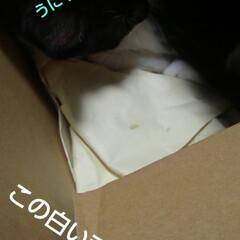 白黒猫/にゃんこ同好会/梅雨/梅雨対策/雨対策/梅雨対策アイテム/... 雨の午前中 にゃんずのごはんを出したあと…(2枚目)
