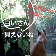 猫のいる暮らし/にゃんこ同好会 午前中の窓辺 毎日 見飽きた窓の外 今日…