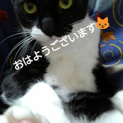 白黒猫/にゃんこ同好会/にゃんこ日めくり おはようございます🐱 雨降りの月曜日 3…