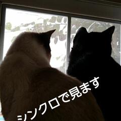 にゃんこ日めくり/三姉弟猫/ニャルソック おはようございます🐱 曇り時々晴れの朝 …(2枚目)
