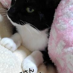 白黒猫/にゃんこ同好会 昨日の夜の僕ちゃん