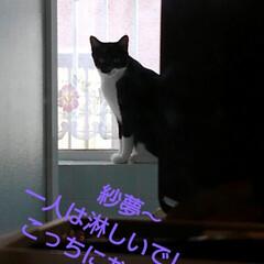 白黒猫/猫/フォロー大歓迎/LIMIAペット同好会/にゃんこ同好会/うちの子ベストショット 洗面所に置いてあるミニ化粧箱 開けていた…