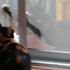 猫のいる生活 網戸越しに可愛い事してました あら、いけ…
