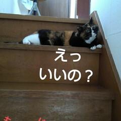 猫のいる生活/にゃんこ同好会/にゃんこ日めくり おはようございます🐱🐱 6月6日 土曜日…(8枚目)