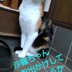 三毛猫/猫のいる生活/にゃんこ同好会/にゃんこ日めくり おはようございます 今日は良い天気です …(7枚目)