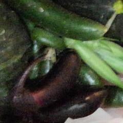 畑/酒饅頭/夏野菜/おでかけ/フォロー大歓迎/夏のお気に入り/... 今日の収穫物の確認をする三匹  カボチャ…(3枚目)