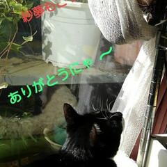 リミアペット同好会/猫/姉弟/昼寝/リミアの冬暮らし 午前中、居間のこの場所は お日様が差し込…(2枚目)