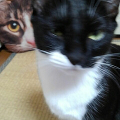 猫のいる生活/白黒猫/にゃんこ同好会/にゃんこ日めくり おはようございます 4月29日 水曜日で…