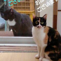猫の気持ち/猫のいる柄が/にゃんこ日めくり おはようございます 5月11日 月曜日で…