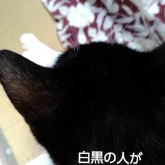 白黒猫/フォロー大歓迎 お外風景を撮っていたら すかさず紗夢が乗…