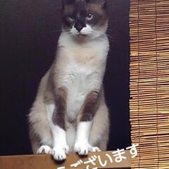 猫の気持ち/猫のいる生活/にゃんこ同好会/にゃんこ日めくり おはようございます 7月9日 木曜日です…