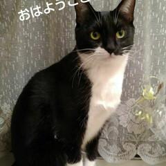 白黒猫/猫のいる暮らし/にゃんこ同好会/にゃんこ日めくり おはようございます 4月14日 火曜日の…