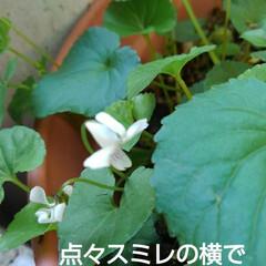 花のある生活 沙羅ちゃんが見ていたお花(6枚目)