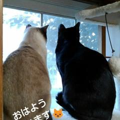 にゃんこ同好会/姉弟猫/にゃんこ日めくり おはようございます🐱 賑やかな朝です  …