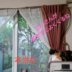 猫のいる暮らし/にゃんこ同好会 小雨が降ったりやんだりの日曜日の午前中 …