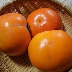風景/秋 地主さんちの柿を頂きました  富有柿です…(5枚目)