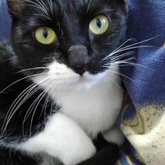 白黒猫/にゃんこ日めくり/にゃんこ同好会 おはようございます🐱 2月21日の金曜日…