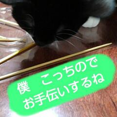 にゃんこ同好会/白黒猫 毎度のできないお手伝い テーブルのかぎぼ…