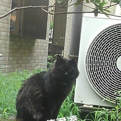 猫のいる生活 昨日 夕方の散歩に行く前な事  黒井さん…(4枚目)