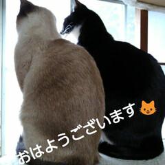 にゃんこ日めくり/三姉弟猫/ニャルソック おはようございます🐱 曇り時々晴れの朝 …
