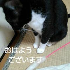 猫の気持ち/にゃんこ同好会/にゃんこ日めくり/ダイソー/梅雨/梅雨対策/... おはようございます 7月5日 日曜日です…