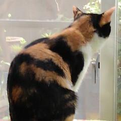 猫/見張り隊/フォロー大歓迎 今日は木曜日の朝です 沙羅がお顔のお手入…