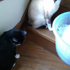 ベランダ/相談中/姉弟/猫派/フォロー大歓迎/LIMIAペット同好会/... お洗濯物が上に行かないと ベランダに出ら…(5枚目)