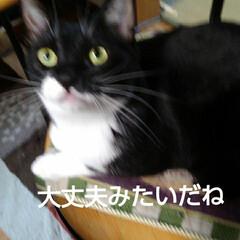 猫の気持ち/猫のいる生活/白黒猫 私が具合の悪いときに 紗夢が心配そうに見…(6枚目)