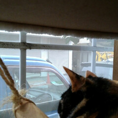 にゃんこ日めくり/三姉弟猫/ニャルソック おはようございます🐱 曇り時々晴れの朝 …(4枚目)