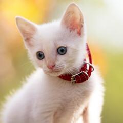 秋/紅葉/猫 紅葉と猫