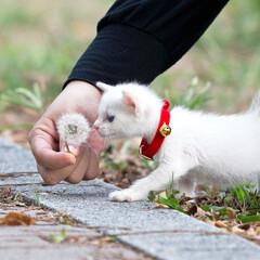 ペット/猫/子猫/ネコ/ねこ/保護猫 僕の名前はみぃ。保護されたばかりで体は小…