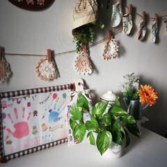 金運UP/アイビー/キッチン窓際/ポトス/玄関/観葉植物 我が家の数少ない自慢の観葉植物たち😊 植…(2枚目)